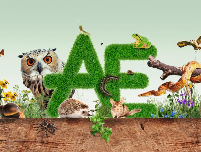Animal Encounters branding and website