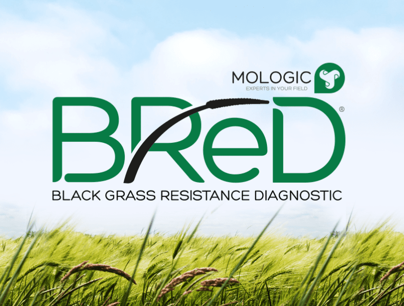 Branding a Blackgrass resistance diagnostic for Mologic and Newcastle University